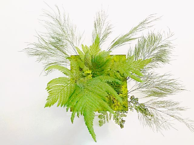 preserved plants