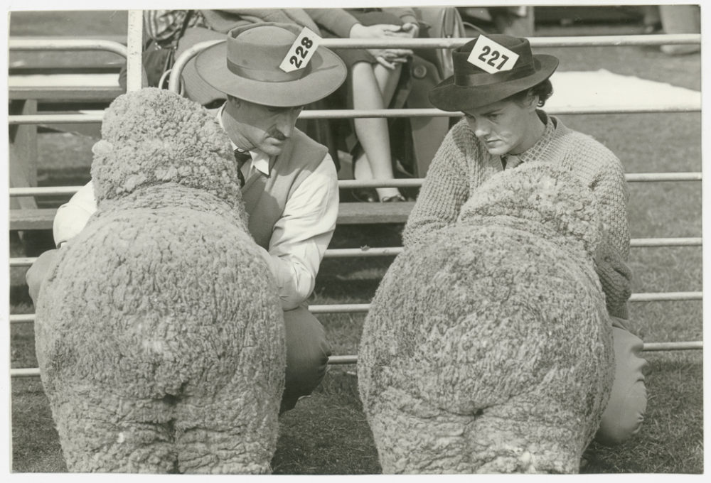 Two exhibitors eye each other's charges, Sheep Show, ca. 1945 by Jeff Carter, Walkabout photograph. hunter.