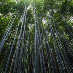 bamboo-head