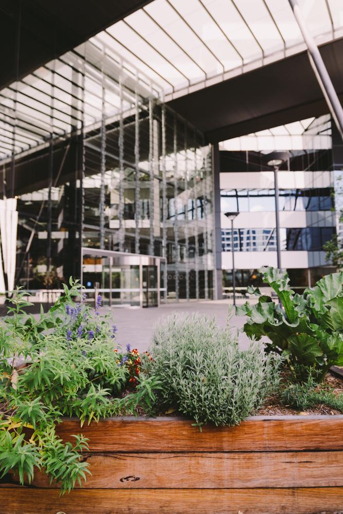 2_urbangrowers2016-03-04-lr-131
