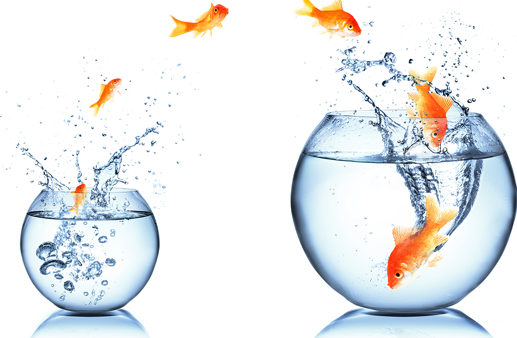 A goldfish jumps from a smaller to a larger bowl